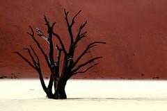 IMG_0387 Deadvlei (Giovanni Pilone) Tags: namibia namib deadvlei paesaggio view landscape scenery survey desert wilderness wasteland panorama rosso dune albero sossusvlei deserto africa desktop