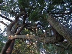 Salem, MA 9-5-17 (miss_skittlekitty) Tags: salem ma witch city massachusetts cemetery graveyard gnarly hanging tree headstones
