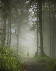 magical forest (biancavanderwerf) Tags: forest mist fog travel navarra spain bianca man person walking alone light dark eerie mystical mysterious green