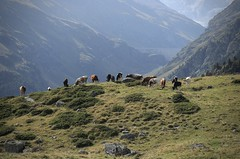troupeaux et le barrage de Moiry (bulbocode909) Tags: valais grimentz lescrêts valdanniviers alpages vaches troupeaux montagnes nature barragedemoiry barrages brume vert cabanedesbecsdebosson