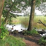 Quiet edge of lake in woodland thumbnail