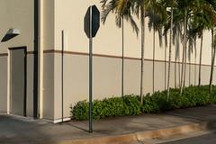 Thatch Palms by scottbrennan6 - Miami, Florida