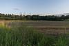 cicogne al tramonto (lodovico.bagnoli) Tags: stork cicogna friuli fagagna sunset