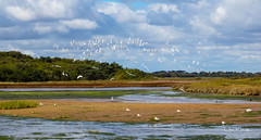 The Wetlands of Christchurch Harbour, Dorset UK (clive_metcalfe) Tags: gull wetland harbour christchurch dorset uk flight flying