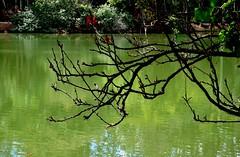 se preparando para a primavera (Ruby Ferreira ®) Tags: lake lago silhuetas silhouettes park parque branches erythrina flôrdecoral tree
