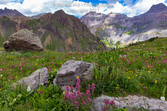Governor's Garden (Bridget Calip - Alluring Images) Tags: 2017 4x4road alluringimagescolorado bridgetcalip colorado coloradomineralbelt coloradowildflowers goldminingdistrict governorsbasin maggiegulch ouraycounty rockymountains sanjuancounty sanjuanminingdistrict sanjuanmountains silverminingdistrict silverton uncompaghrenationalforest yankeeboybasin alpinemeadow alpinewildflowers backroad blueskies botanical flora gulch highaltitude landscape meadow miningdistrict summer