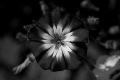 Monochrome bloom