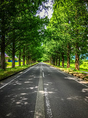 Metasequoia Avenue (moaan) Tags: takashima shiga japan jp avenue road rowoftrees roadsidetrees metasequoia green light sunlight dappledsunlight vanishingpoint august summer midsummer metasequoianamikiavenue utata 2017 iphone iphone7