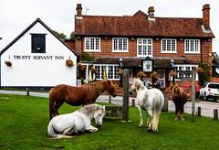 The Trusty Servant (Chalto!) Tags: newforest hampshire minstead pony horse pub inn publichouse building green stocks