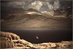 2017 07 20 Cowal South IR720nm - 43 (Mister-Mastro) Tags: cowal hiking infrared ir ir720nm lochfyne schottland wanderung sail segelboot gebirge berg mountain sea loch scotland