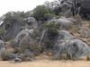 DSCN4631 (David Bygott) Tags: africa tanzania serengeti natgeoexpeditions 170718 giraffe rock kopje