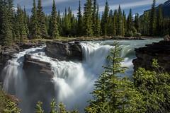Les chutes Athabasca (mgirard011) Tags: jasper alberta canada ca 200faves