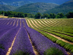 Valensole (blanka309bb) Tags: provence lavanda violet france