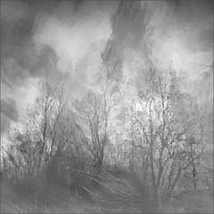 Grey and White by Olli Kekäläinen -
