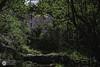 El molinete (Y una vaca vigilando) (J.Gargallo) Tags: linares linaresdemora teruel aragón españa eos eos450d 450d canon canon450d canonefs18200 agua verde arboles