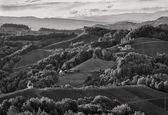 rolling hills (gnarlydog) Tags: austria steirmark hills blackandwhite monochrome bw landscape sunset ridges vineyard wine rural highcontrast winestrasse highvantagepoint