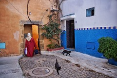Innuendo.. (u c c r o w) Tags: cat cats morocco rabat colors beautiful street urban city citylife streetview uccrow woman arab arabian red blue wall road urbanlife