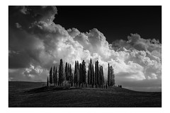 Cypress Hill (vulture labs) Tags: tuscany landscape cypress trees blackandwhite fine art photography bw italy workshop