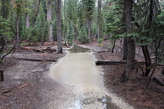 Trail full of pollen-covered puddles (rozoneill) Tags: lassen national park redding chico california hiking pacific crest trail backpacking volcanic wilderness cascades volcano peak