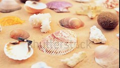 Beach and shells. Video. For viewing of video follow the link. (daria.boteva) Tags: aquatic background beach blue calm climate coast coastline conch copy day exotic holiday idyllic jewelry lagoon landscape marine nature object ocean outdoors pacific paradise pearls relax relaxation resort sand sea seascape seashell seashore shell sky space star summer sun sunlight sunny sunshine tourism tranquil travel tropical vacations water