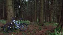 um den Gaisberg (twinni) Tags: mw1504 23092017 bike biketour salzburg austria österreich flachgau gaisberg mtb winterradl winterbike 20 bergziege