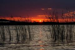 Last light - letztes Licht (ralfkai41) Tags: sun lake water sunset reflexion see sonnenuntergang spiegelung nature outdoor reflektion wasser natur sonne weed schilf grokaynaersee