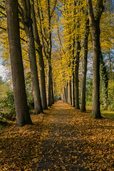 Autumn lane @ Alblasserdam
