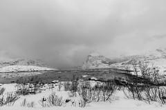 IMG_2567 (alessandro orfanù) Tags: norway lofoten vesteralen hurtigruten winter snow northernlight
