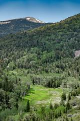 Lehman Creek (Gentilcore) Tags: greatbasin greatbasinnationalpark matheroverlook nationalparkservice nevada stephentmather whitepinecounty lehmancreek wheelercreek baker unitedstates us
