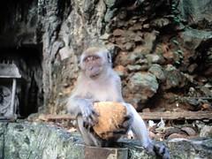 1994_Singapore_2016-07-18_Photo_133 (Matthias & Paula) Tags: singapore sentosa kuala lumpur malaysia cameron highlands zoo japanese gardens