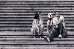 30072017-IMG_5424.jpg (rod2lj) Tags: dalmata expecting pensando perro thinking burgos
