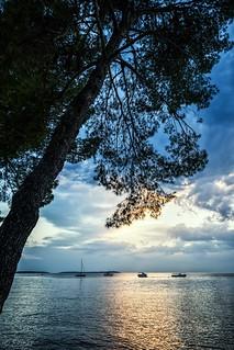 pine tree on the shore