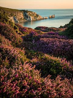 Heather and the Needles Headland