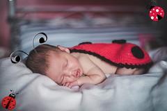 ladybug (Mááh :)) Tags: 365days 365dias 365 baby bebê ladybug joaninha ensaio newborn 10dias
