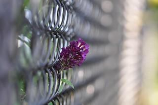 Fence bokeh