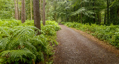 Woodland Path Beacon Hill (John__Hull) Tags: woodland path beacon hill woodhouse leicestershire charnwood uk england trail trees wood summer nikon d3200 sigma 1020mm landscape ferns bracken