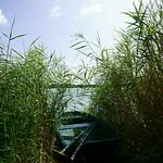 Ruderboot im Schilf thumbnail