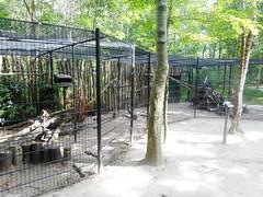 Crows (Going to the Zoo with Trebaruna) Tags: landgoedhoenderdaell hoenderdaell dierenparkhoenderdaell annapaulowna zooannapaulowna dierenparkannapaulowna netherlands enclosures 2017 07082017