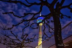 Fernsehturm (cornelia_auguste) Tags: abendstimmung medienhafen fernsehturm düsseldorf bäume nrw germany lzb nacht night abendhimmel sky abendstunde architektur corneliaauguste himmel dämmerung blue