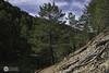 Las raices del monte (J.Gargallo) Tags: arboles monte montañas raices linares linaresdemora teruel aragón españa eos eos450d canon canon450d canonefs18200