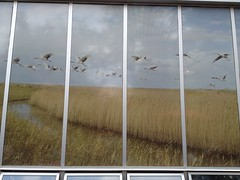 Cranes #art2017 (Mr. Happy Face - Peace :)) Tags: hww art2017 wetlands yyc art albertabound protected environment window facade architecture whoopingcranes birds
