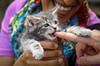 IMG_2569 (kz1000ps) Tags: boston massachusetts bostoncommon common park cats kitties kittens felines caturday purr catcafe brighton humane society adoptions