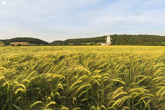 Usk Valley Windmill, Llancayo (technodean2000) Tags: usk valley windmill llancayo monmouth monmouthshire newport wales uk lightroom nikon d610 landscape field food outdoor hay dune plain serene sand plant grass sky road d810