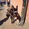 IMG_5907 (brimidooley) Tags: morocco maroc marrakech marrakesh africa citybreak city travel المغرب مراكش