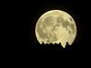 Eclipse de sapins (Fab. A) Tags: moon lune éclipse ombres lumière astres ciel noir arbres canon m5 55250
