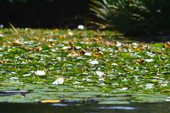 Samish Lake (TerriJane01) Tags: samishlake bellingham pacnw kayaking