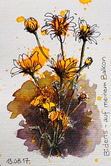 Bidens on my balcony - explored (Jutta Richter) Tags: bidens flower gardenflower postcardswap postkarte yellow sketch splashfirst skizze