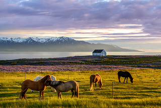 Sunset in the North of Iceland