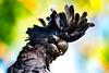 20170919-104a-Katherine River Walk-Flickr.jpg (Brian Dean) Tags: 2017tour flickr katherineriverwalk facebook nt caravaning slideshow birds natnaturetrophyforprojectedimages