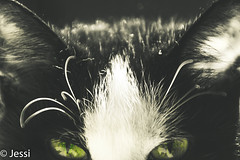 green eyes (Felicis_Flower) Tags: animal haustier pet katze cat schwarz weis black white green grün augen eyes